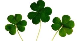 Der Sankt Patricks Day wird alljährlich am 17. März gefeiert